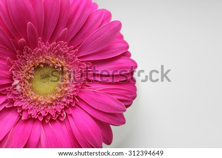 Second background with pink gerber. It can be used as a background for postcard or invitation cards. - stock photo