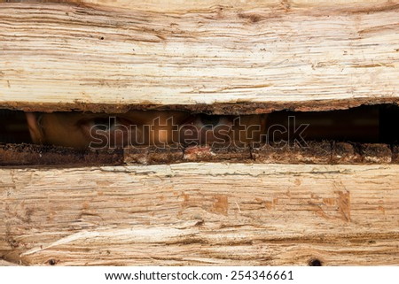 Secret look - stock photo