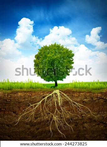Section in soil showing the root of a tree - stock photo