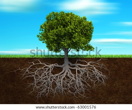 Section in soil showing the root of a tree - 3d render illustration - stock photo