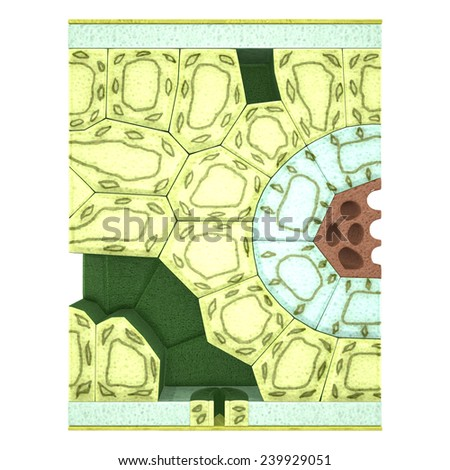Section of a Leaf  - stock photo