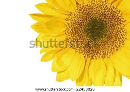 Section of a sunflower - stock photo