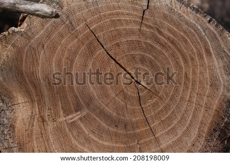 section of a tree trunk - stock photo