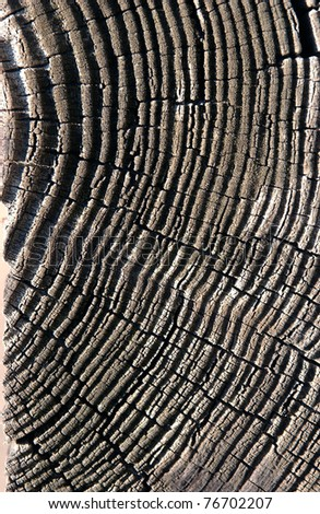 section of an oak tree trunk - stock photo