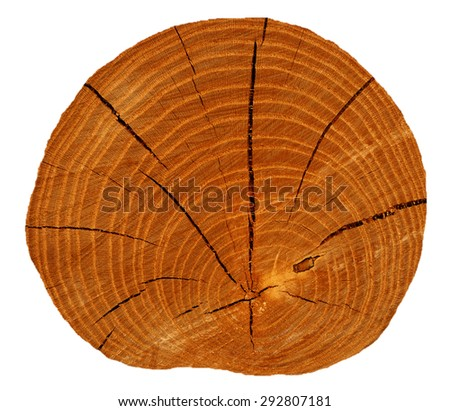 Section of dry logs with cracks isolated on white background