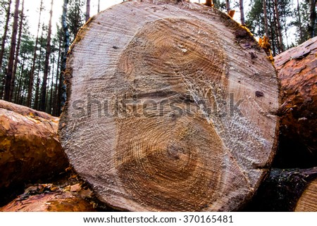 section through a block of wood as a background - stock photo