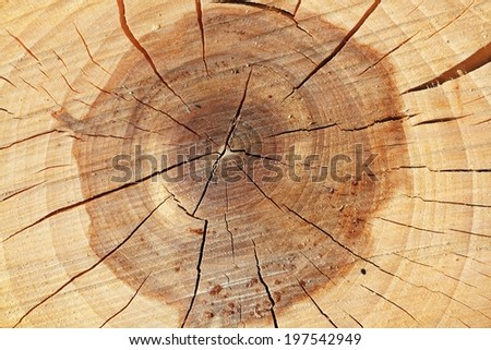 Sectional view of tree - structure of wood - stock photo