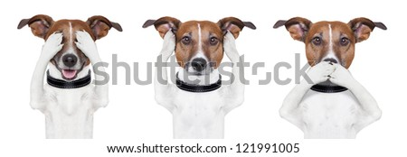 See no evil, hear no evil, speak no evil dog - stock photo