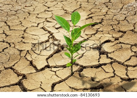 Seed and Dry soil in arid areas - stock photo
