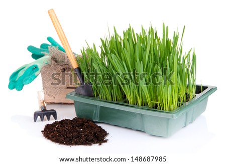 Seed box with seedling isolated on white - stock photo