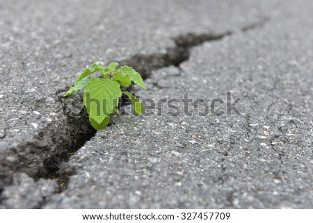 Seed growing through crack in pavement Ecology concept. Rising sprout on dry ground. - stock photo