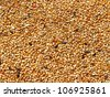 Seed mixture background. Pet food for birds. (finches) - stock photo