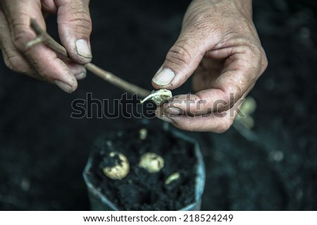 seed pod germination - plant seedling - stock photo