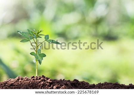 seed root of young plant and light in morning - stock photo