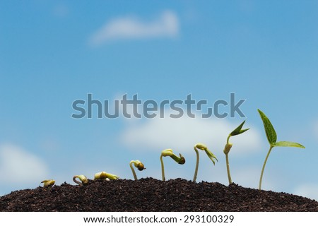 seed row growing on soil - stock photo