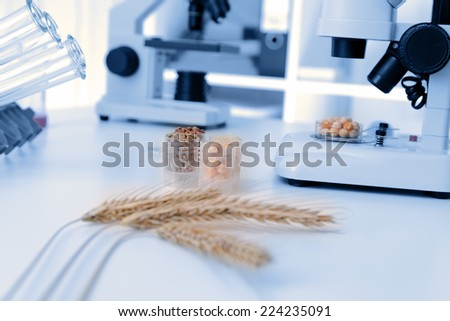 Seed subject to selection in Microbiological laboratory  - stock photo