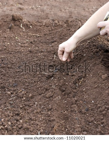 Seeding - stock photo