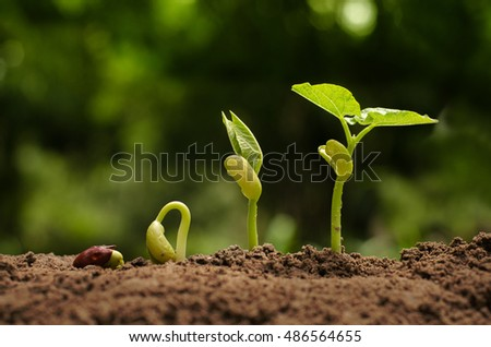 Seedling and Plant sprout growing step over green background