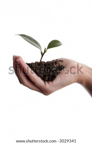 Seedling and soil held in hand isolated on white background