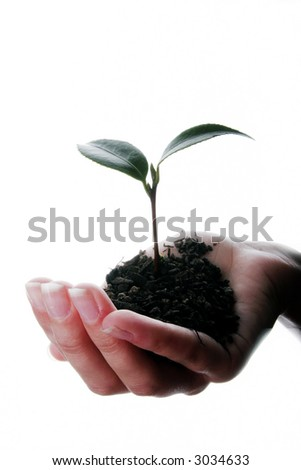Seedling and soil held in hands isolated on white background - stock photo