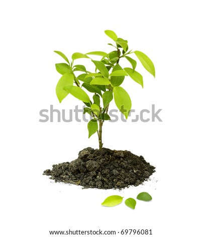 Seedling green plant on a white background, Depending on the soil pile is brown, black and fertilizers. - stock photo