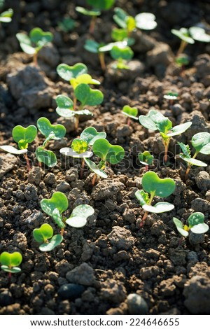 Seedling growth  - stock photo