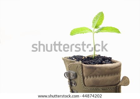 Seedling in a boot - stock photo