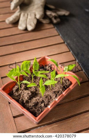 seedling in a tray, ready to be planted - stock photo
