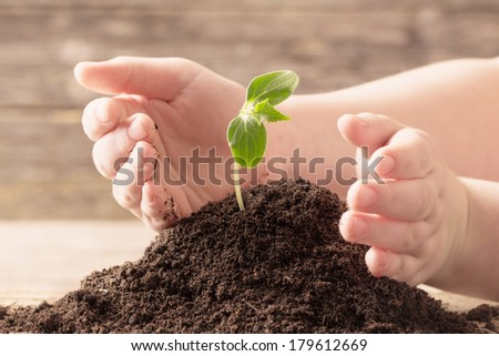 seedling in children's  hands on wooden background - stock photo