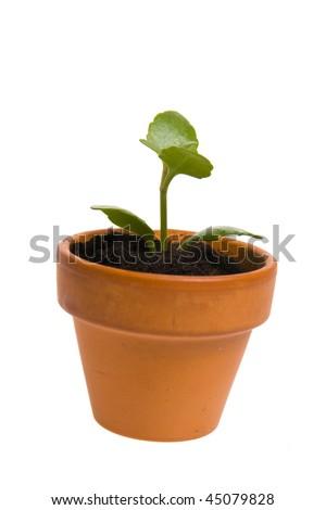 seedling in flowerpot - stock photo