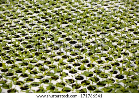 Seedling in greenhouse - stock photo