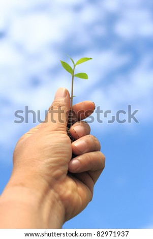 seedling in hand with blue sky.