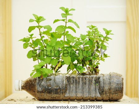 Seedling in recycle bottle  - stock photo