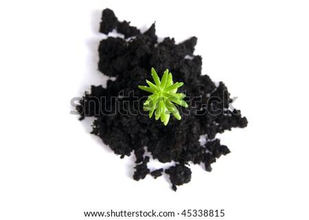 seedling isolated on white - stock photo