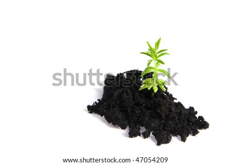 seedling isolated on white - stock photo