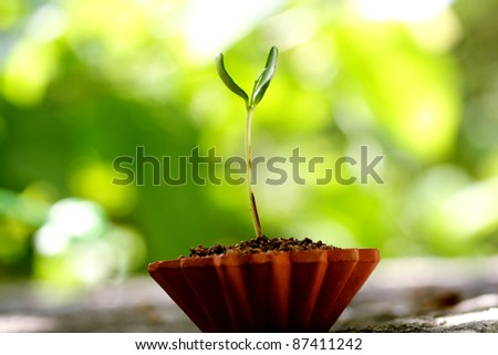 Seedling -New life