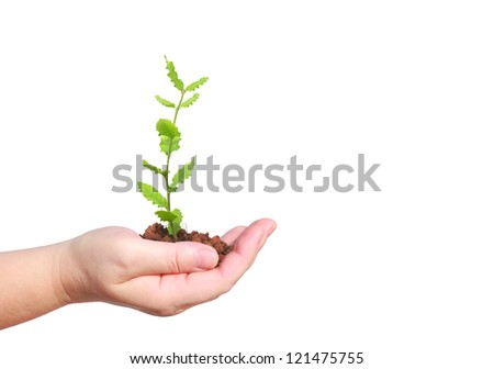 Seedling of oak in human hand isolated on white - stock photo