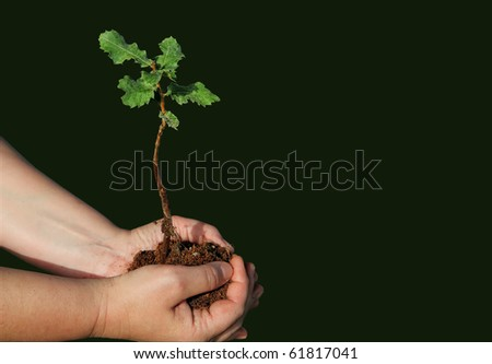 Seedling of young oak and human hands - stock photo