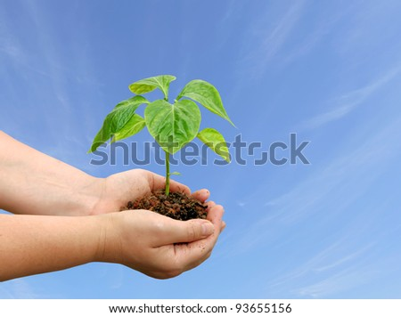 Seedling of young plant and human hands on the blue sky background - stock photo