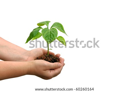 Seedling of young plant and human hands on the white background - stock photo