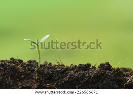 seedling plant  growing from the ground ,concept for business grow - stock photo