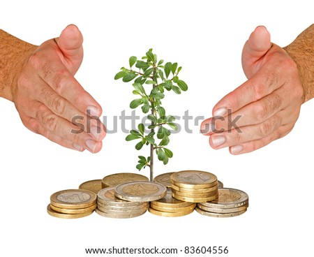 seedling protected by hands - stock photo