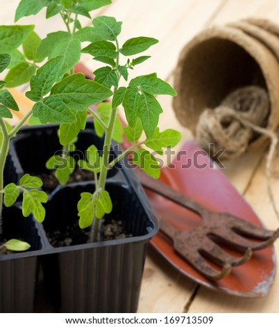 seedling tomatoes and garden tools on a wooden background - stock photo