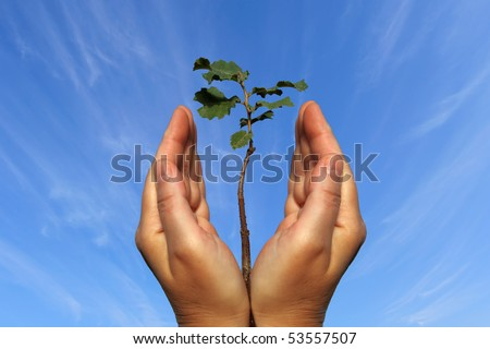 Seedling tree and human hands on the sky background - stock photo