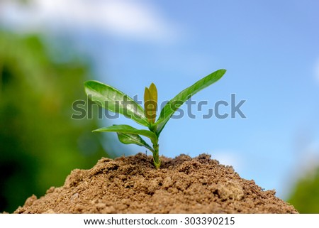 Seedling trees on blue sky background