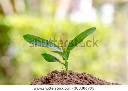 Seedling trees on green background