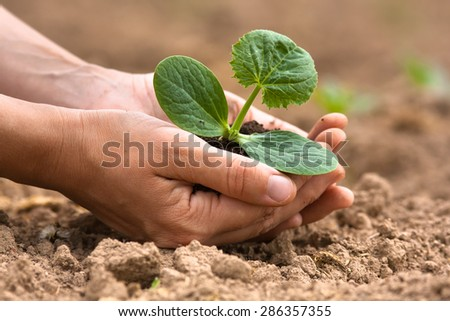 seedling with soil in hands of woman - stock photo