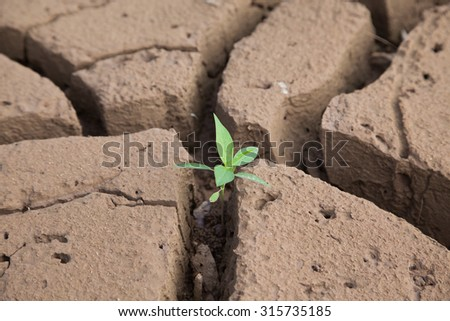 Seedlings and drought in Thailand. - stock photo