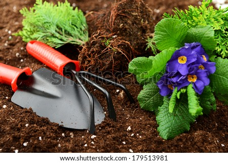 seedlings and garden tools on soil