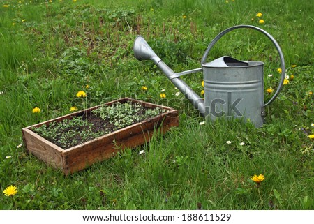 seedlings and watering can